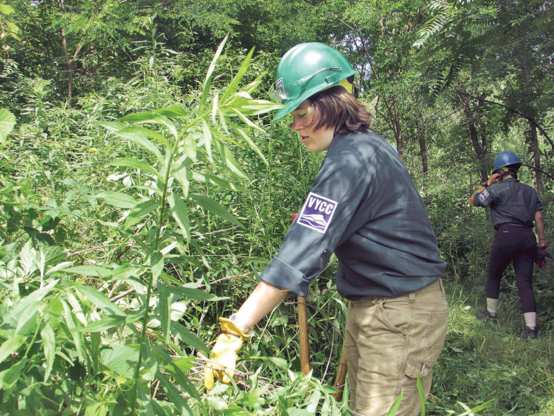 """""""Conservation corps clearing Hoosic River trail in Pownal for public use"""""""